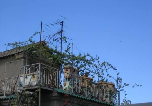 Улей на балконе